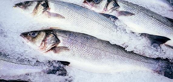 Verse vis verpakken